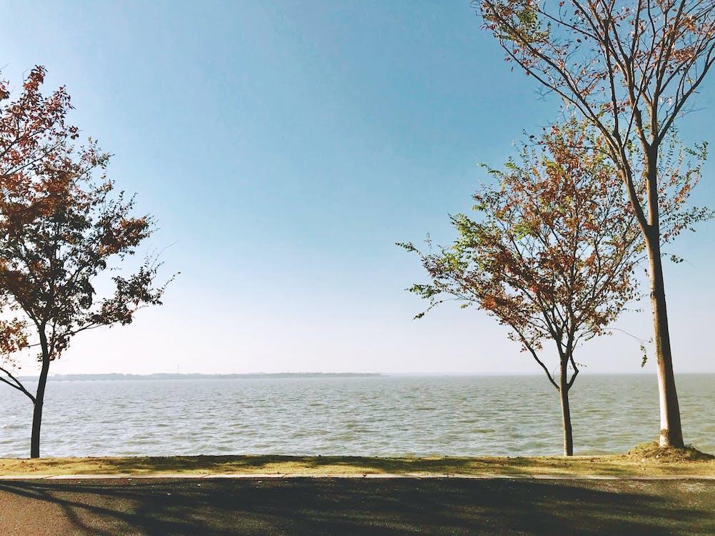 arbre, côté lac, lac de dianshan