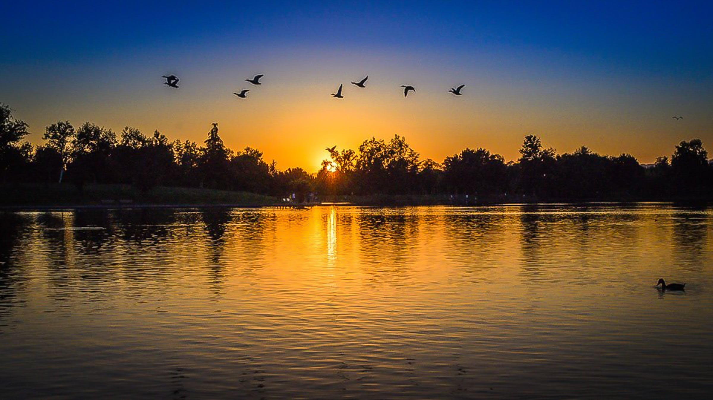 Silhouette of Forest With Birds Flying Above Body of Water during Sunset