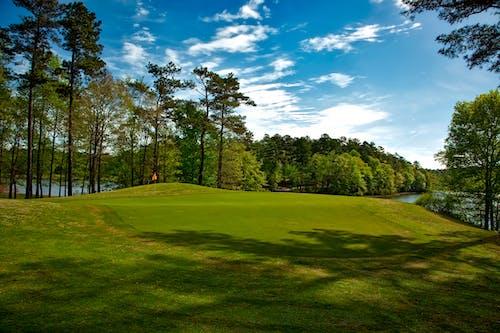 Imagine de stoc gratuită din arbori, câmp de iarbă, cer, cer albastru