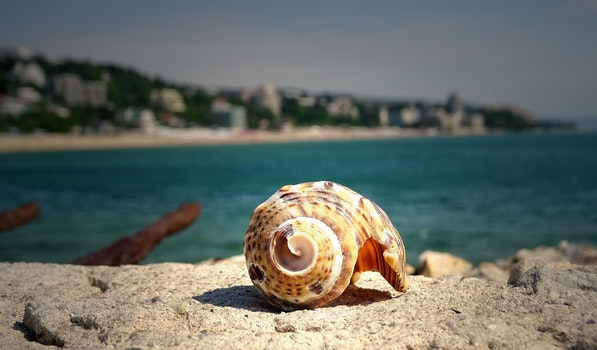 Brown Shell on Stone Near in Sea