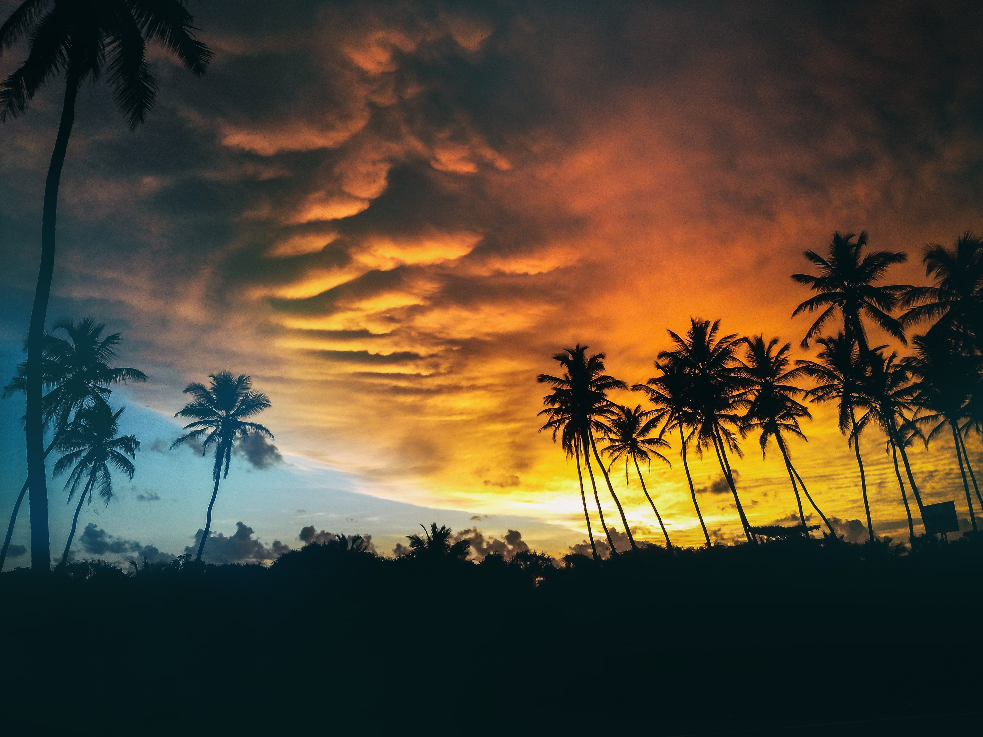 Silhouette of Coconut Trees Under Dark Clouds during Golden Hours