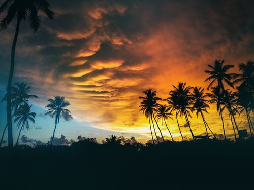 경치가 좋은, 구름, 구름층, 나무의 무료 스톡 사진
