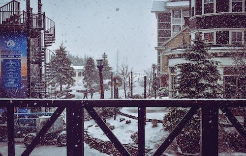 Бесплатное стоковое фото с архитектура, городской, деревья, дневной свет