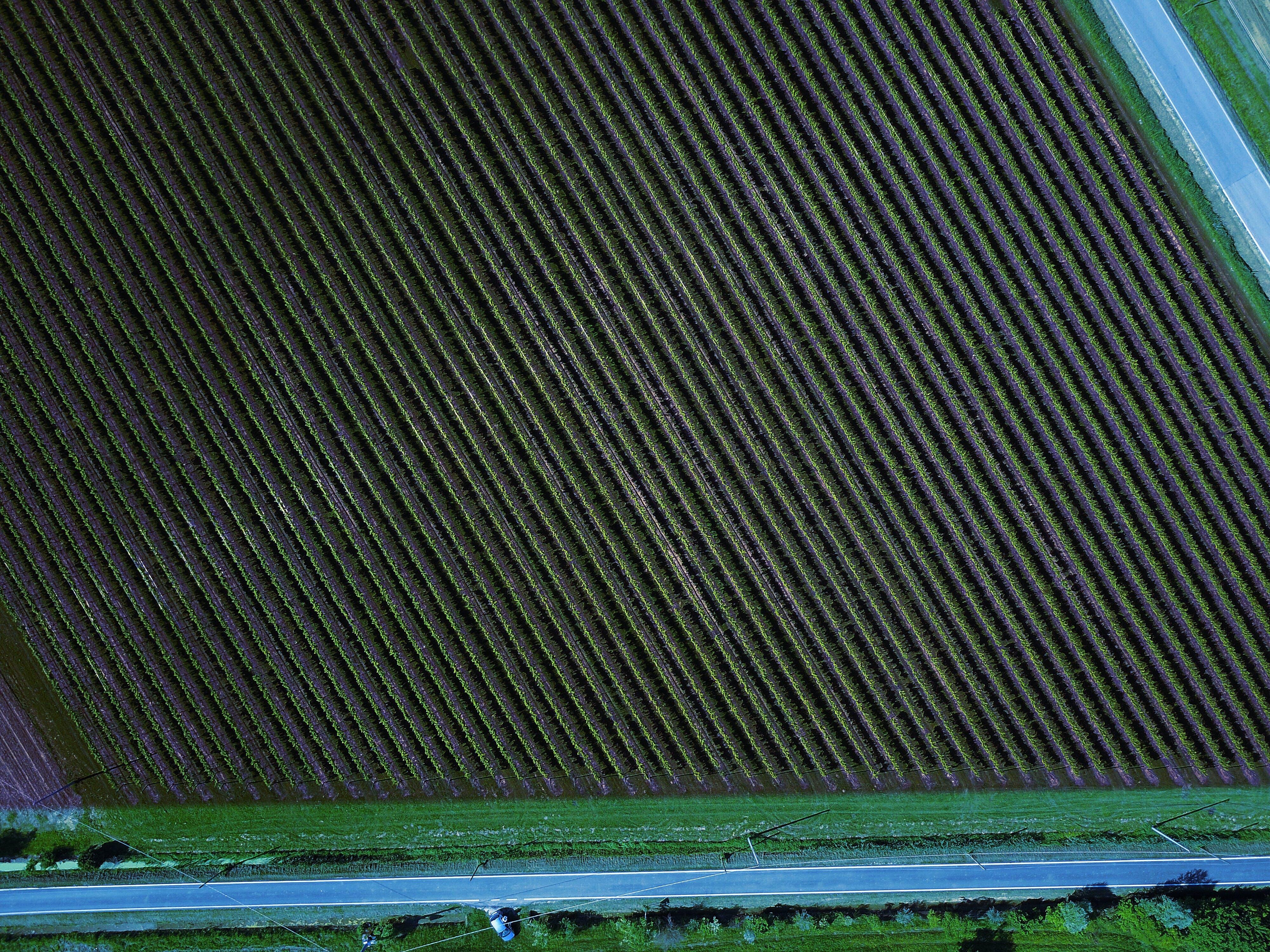 Free stock photo of aerial photography, grapevines, vigna, vigneto