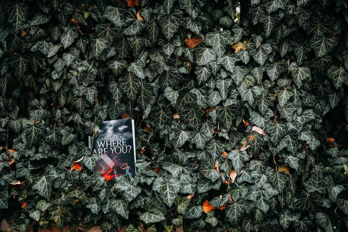 boek, boom, evergreen