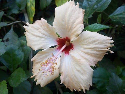 白色的花 的 免费素材照片