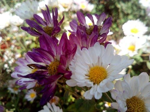 天然花, 美麗的花朵 的 免费素材照片
