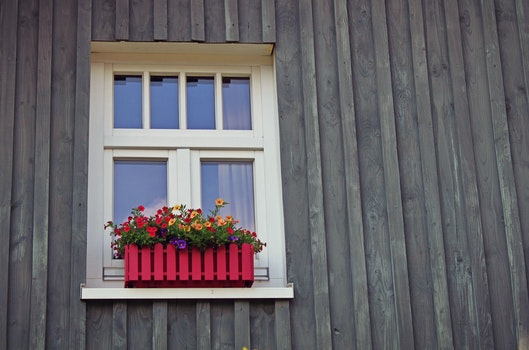 Red and Yellow Flowers Near Window