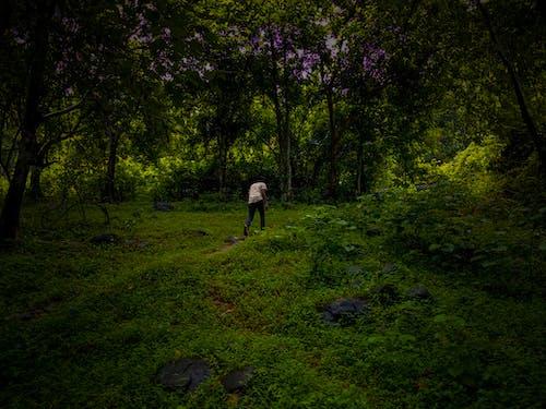 Foto d'estoc gratuïta de balança, bonic, en el medi natural, fons
