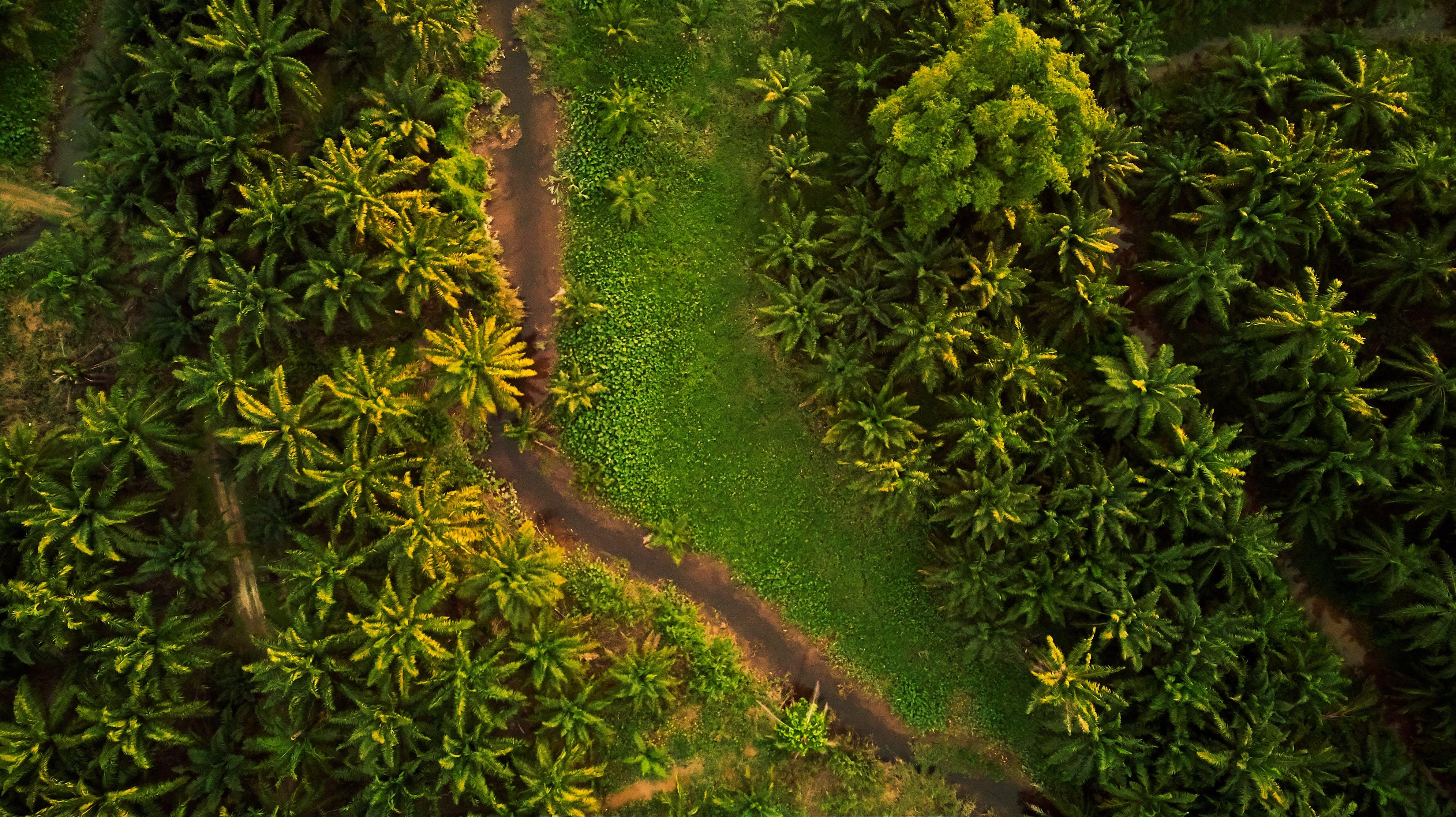 Foto d'estoc gratuïta de arbres, carretera sense asfaltar, foto des d'un dron, fotografia aèria