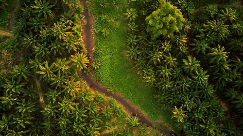 คลังภาพถ่ายฟรี ของ การถ่ายภาพโดรน, ต้นไม้, ถนนดิน, ธรรมชาติ