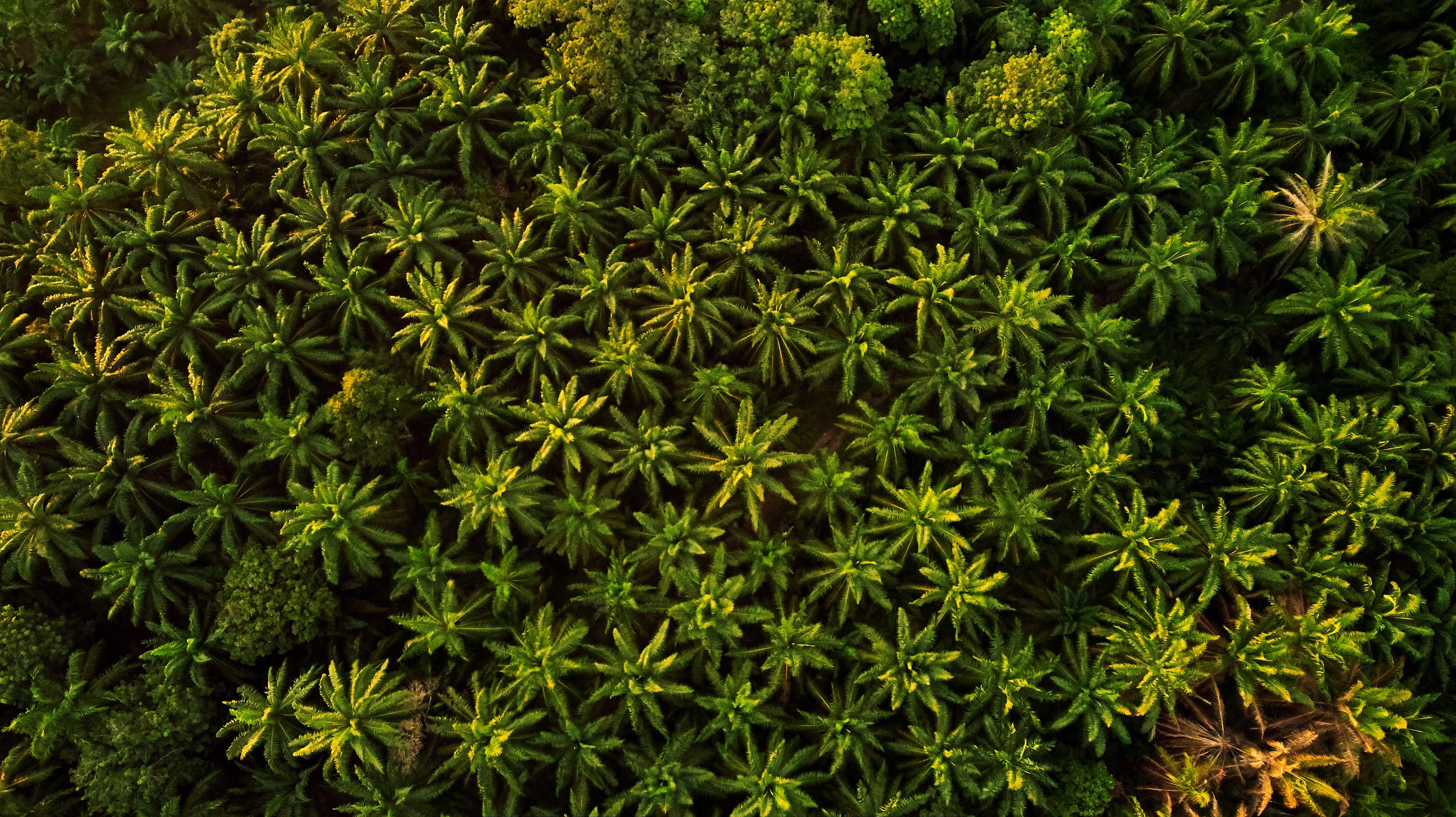 Kostenloses Stock Foto zu bäume, holz, luftschuß, palmen