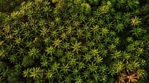 Fotobanka sbezplatnými fotkami na tému les, lesy, letecký záber, palmy
