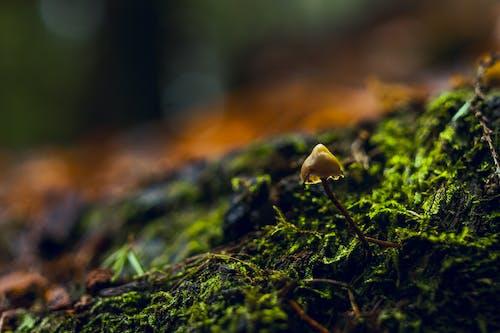 Fotos de stock gratuitas de amanecer, bosque, césped, color
