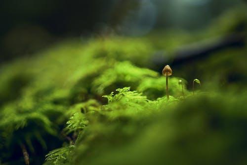Immagine gratuita di fungo velenoso, muschio, profondità di campo, verde