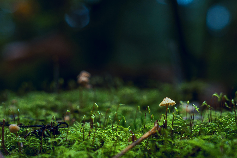 Shallow Photography of Yellow Mushroom on Moss
