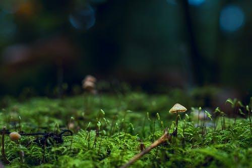 Δωρεάν στοκ φωτογραφιών με toadstool, ανάπτυξη, βρύο, γκρο πλαν