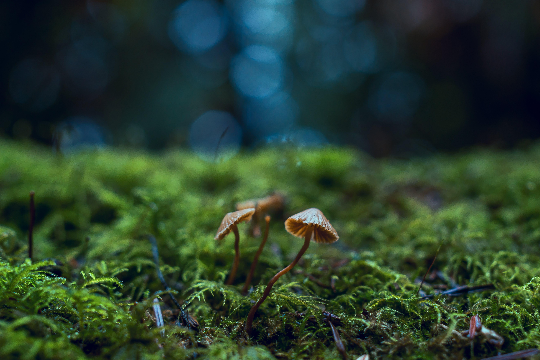 4k tapeta, botanický, ekologie
