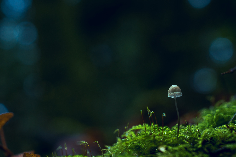 Beige Mushroom Selective-focus Photography
