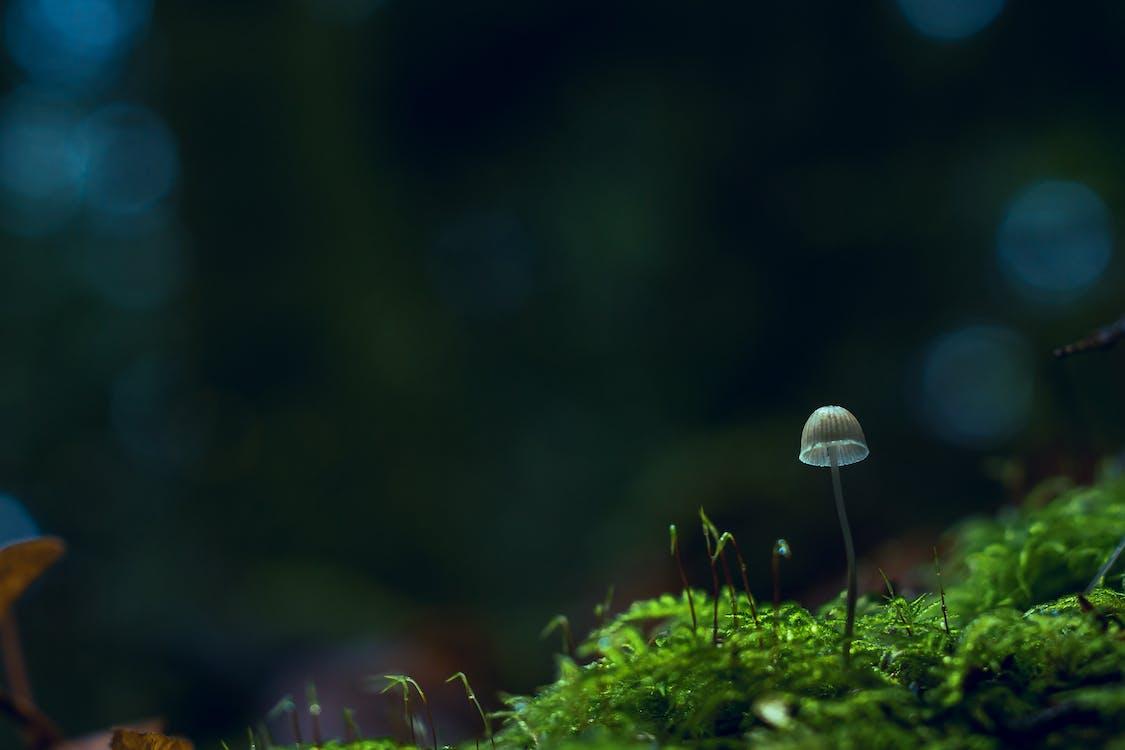 botanika, čerstvosť, detailný záber