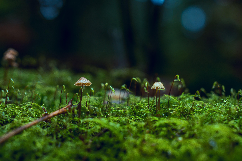 Close-Up Photo of Fungi