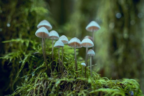 Immagine gratuita di biologia, Boleti, erba, foresta