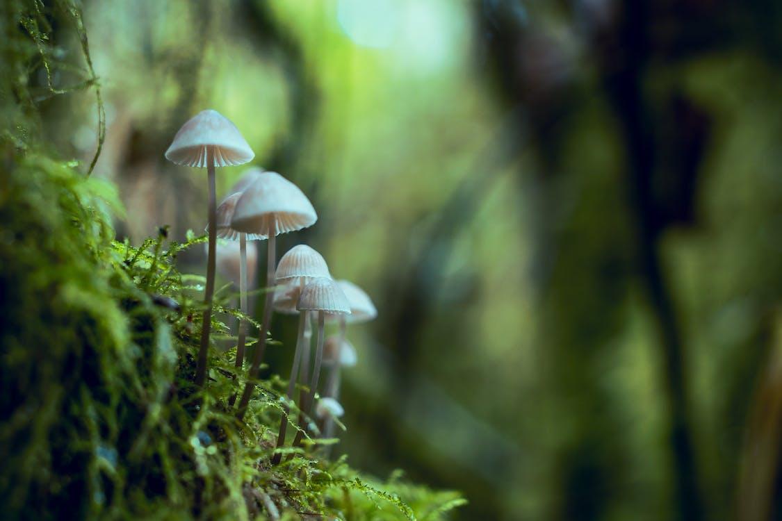 Shallow Focus Photography of Mushrooms