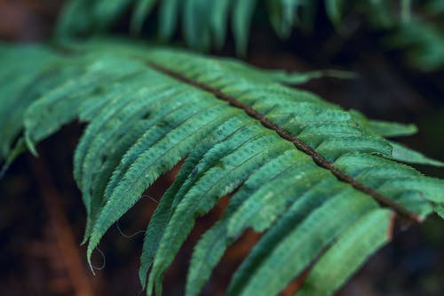 Close-up Photography of Fern Plants
