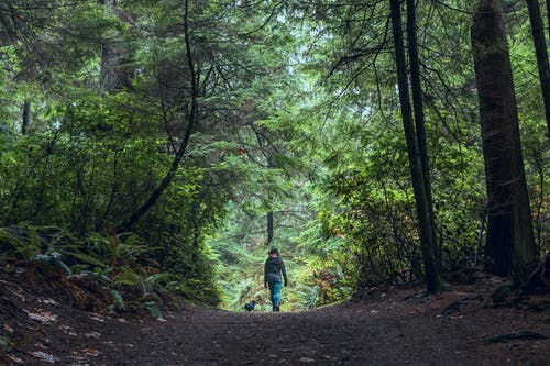 Photo of Person Walking In The Middle Of Forest