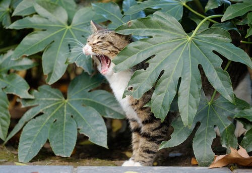 Tabby Cat Behind Leaves
