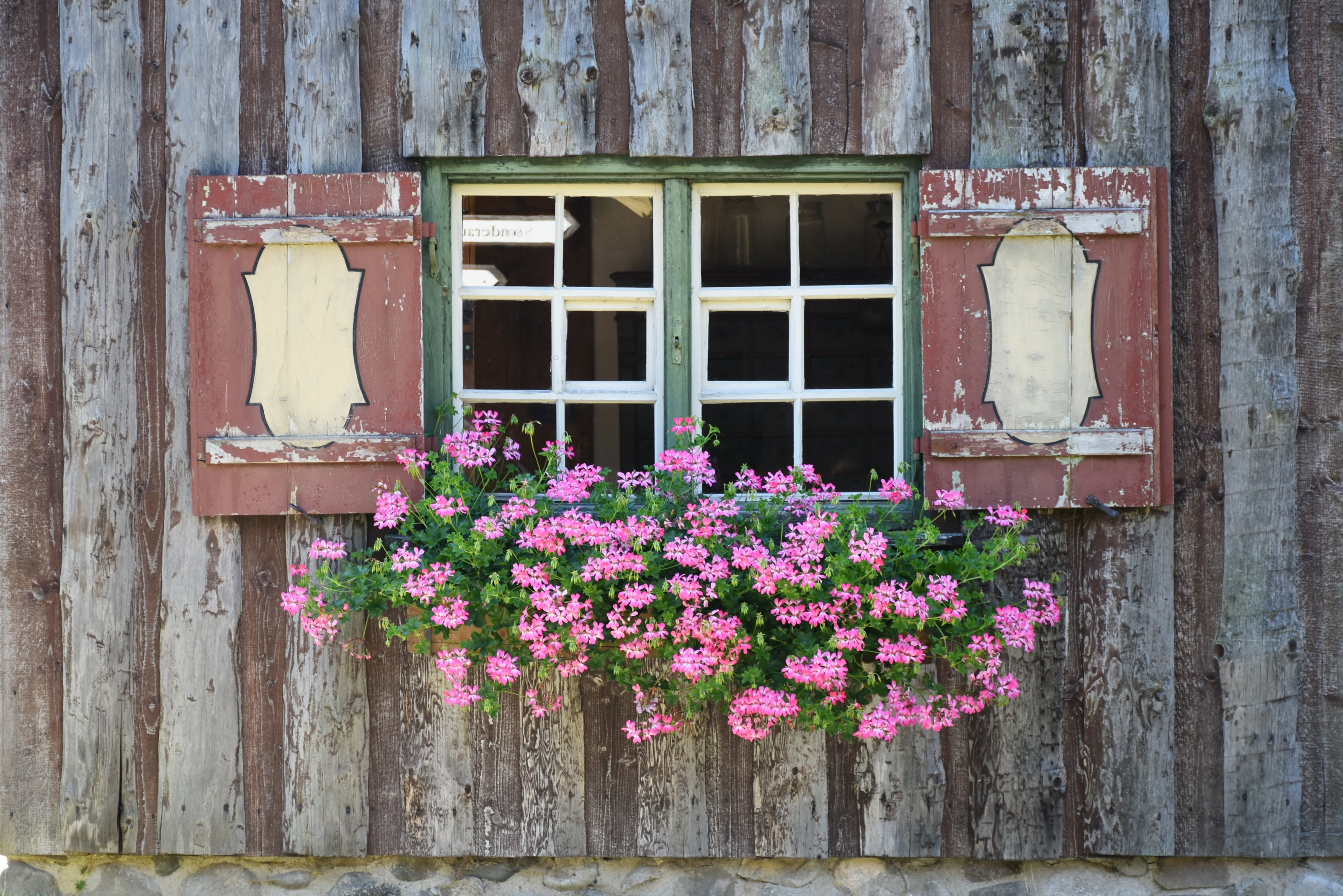 Green and Pink Flower on Green and White Wooden Framed Window