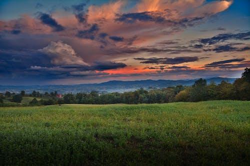 Gratis lagerfoto af aften, bane, græs, gylden time