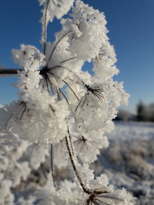 Ilmainen kuvapankkikuva tunnisteilla shine # loisto # lumi # talvi # kylmästi # beatiy # fairyta