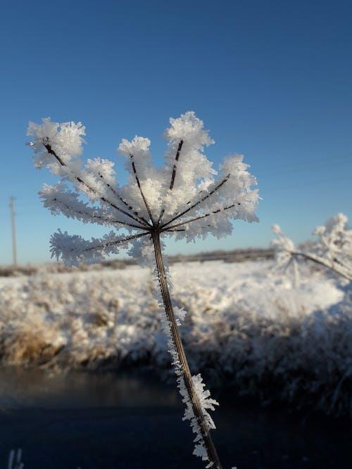 Ilmainen kuvapankkikuva tunnisteilla tall # loistaa, зима # иней #, холодно