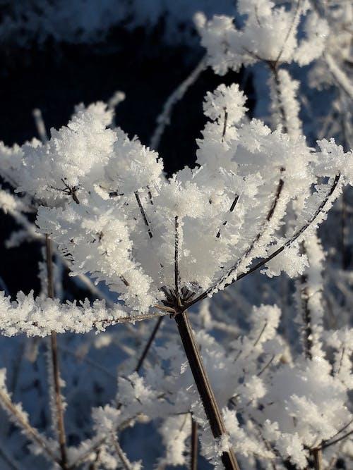 """Ilmainen kuvapankkikuva tunnisteilla """"> зимний # снег # холодно # высокий # </font, <font style=""""vertical-align: inherit, <html> """">"""