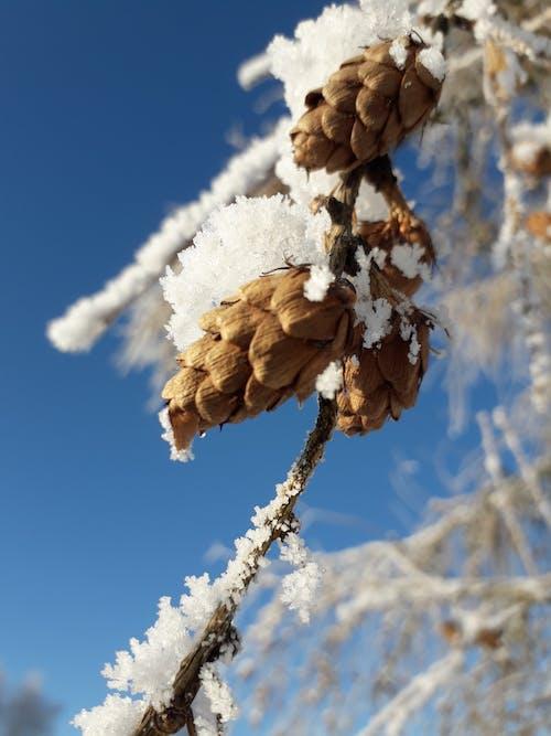 Ilmainen kuvapankkikuva tunnisteilla talvi # lumi # kylmästi # beautyfull