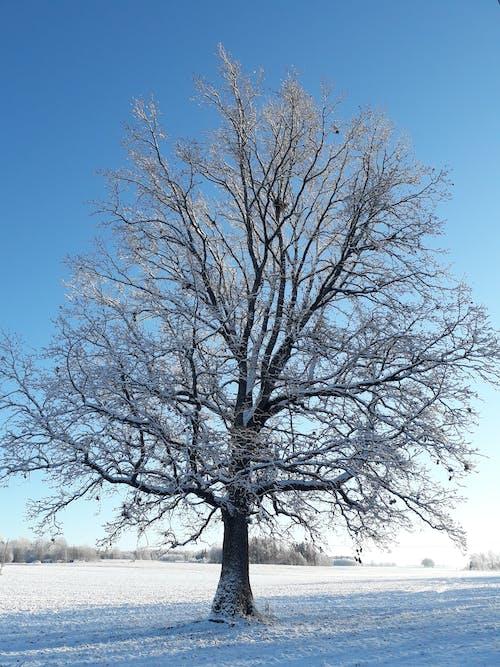 Ilmainen kuvapankkikuva tunnisteilla talvi # kylmästi # lumi # loistaa #
