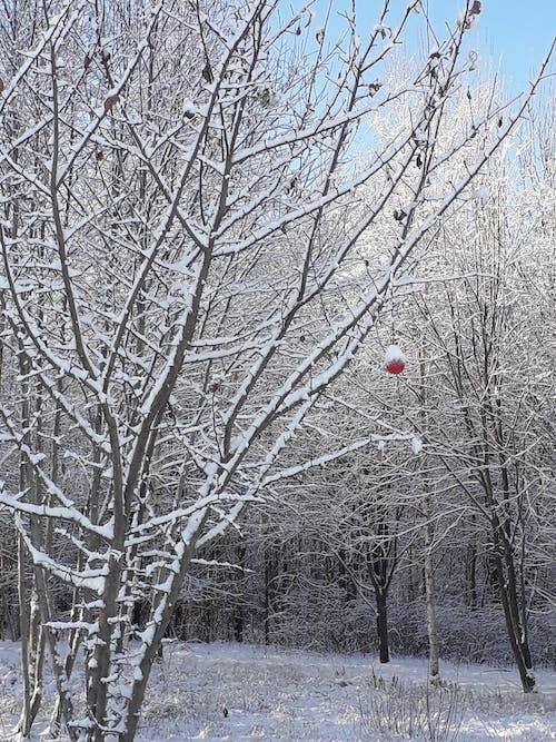 Ilmainen kuvapankkikuva tunnisteilla talvi