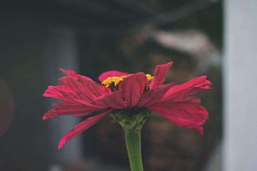 增長, 季節, 微妙, 明亮 的 免费素材照片