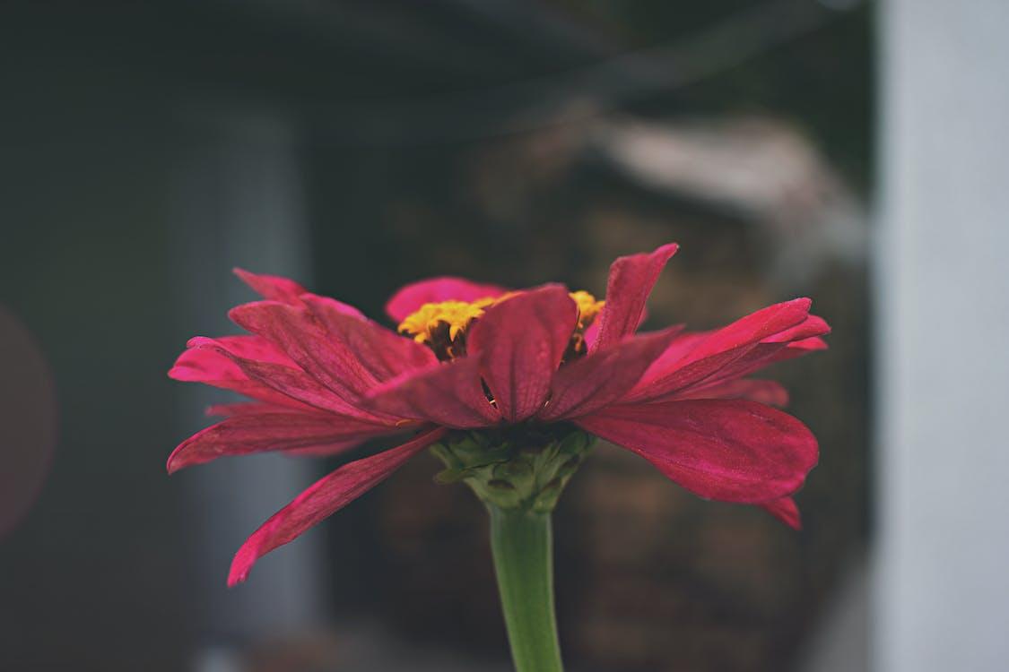 avne, blomst, blomstrende