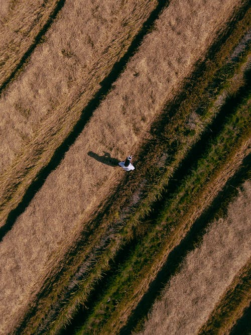 Aerial Photo of Person Standing on Grass Field