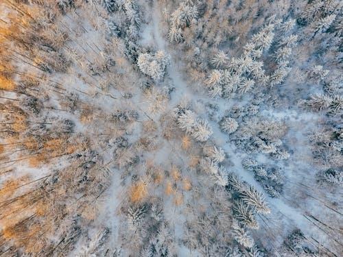 Foto profissional grátis de aerofotografia, árvores, branco, com frio