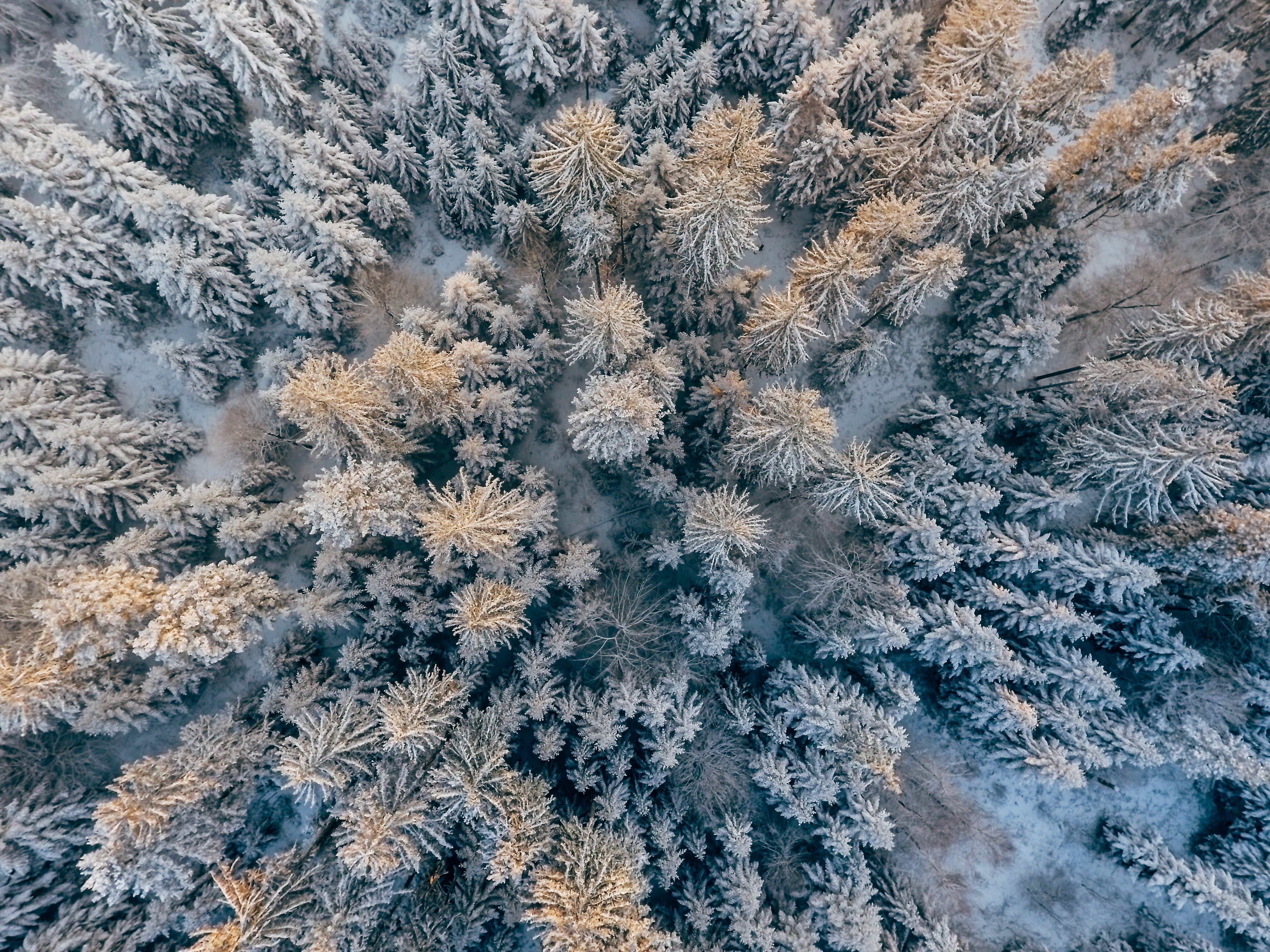 Top View Photo of Trees Covered With Snow