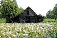 field, flowers, countryside