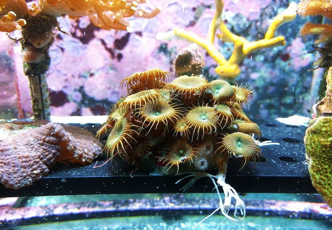 acuario, agua, arrecife