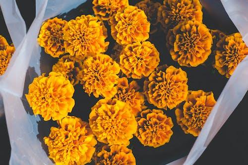 植物群, 綻放, 花, 花瓣 的 免费素材照片