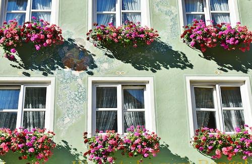 건물 외관, 건축, 경작자, 꽃의 무료 스톡 사진