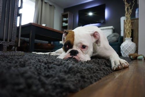 Foto profissional grátis de acomodado, adorável, animal, animal de estimação