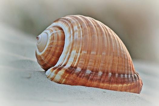 Kostenloses Stock Foto zu strand, sand, meeresküste, schale