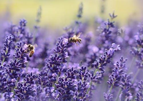 คลังภาพถ่ายฟรี ของ ดอกไม้, ต้นไม้, ธรรมชาติ, ผึ้ง